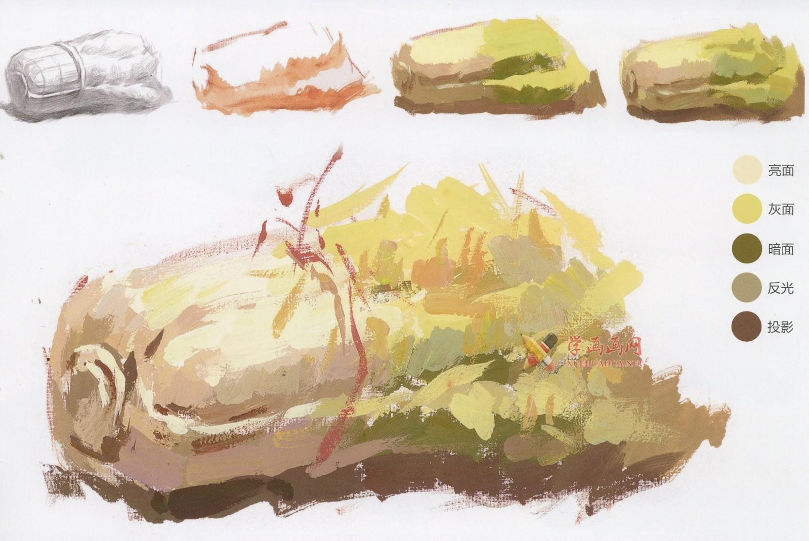 怎么画大白菜?水粉画单体入门教程:大白菜的画法图解及高清范画临摹图片素材(4)