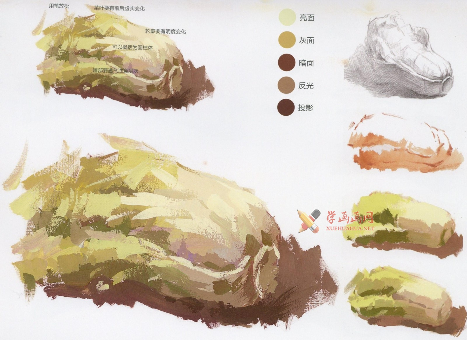 怎么画大白菜?水粉画单体入门教程:大白菜的画法图解及高清范画临摹图片素材(6)