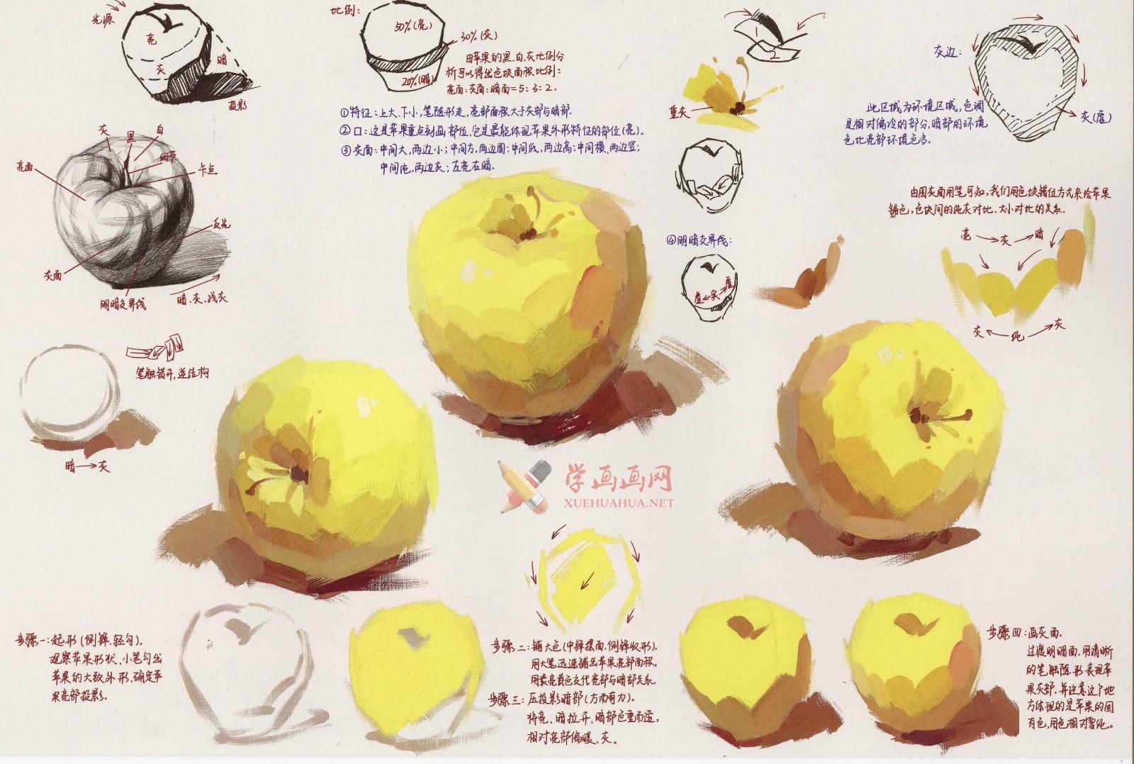 水粉画单体静物:苹果的画法图解及临摹高清范画图片(1)