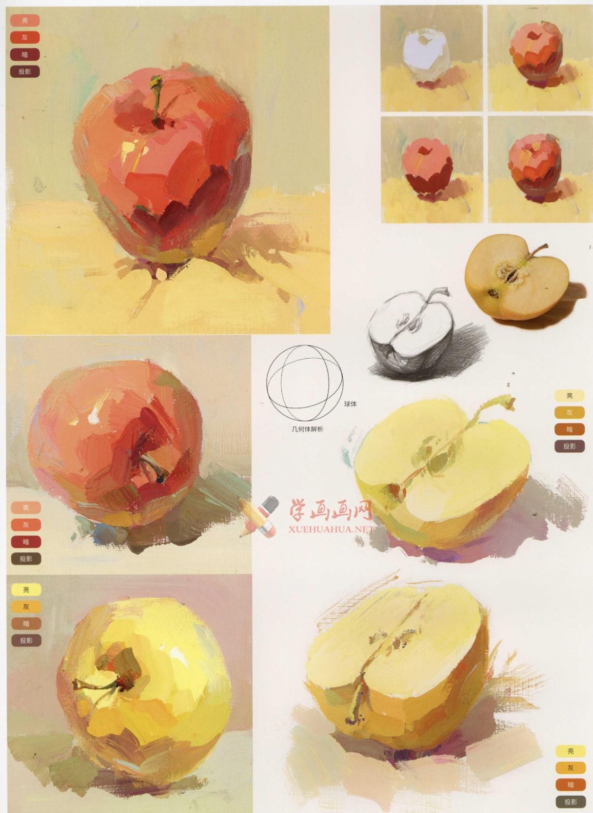 水粉画单体静物:苹果的画法图解及临摹高清范画图片(6)