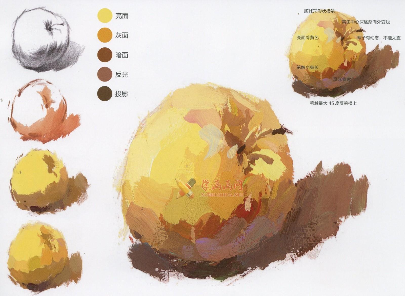 水粉画单体静物:苹果的画法图解及临摹高清范画图片(7)