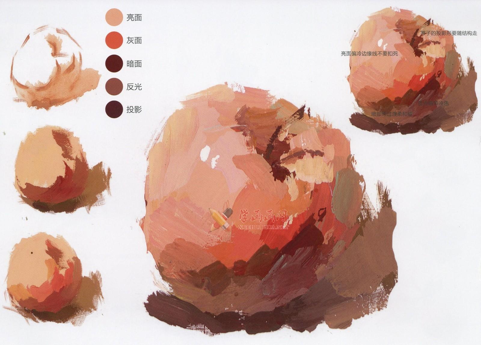 水粉画单体静物:苹果的画法图解及临摹高清范画图片(8)