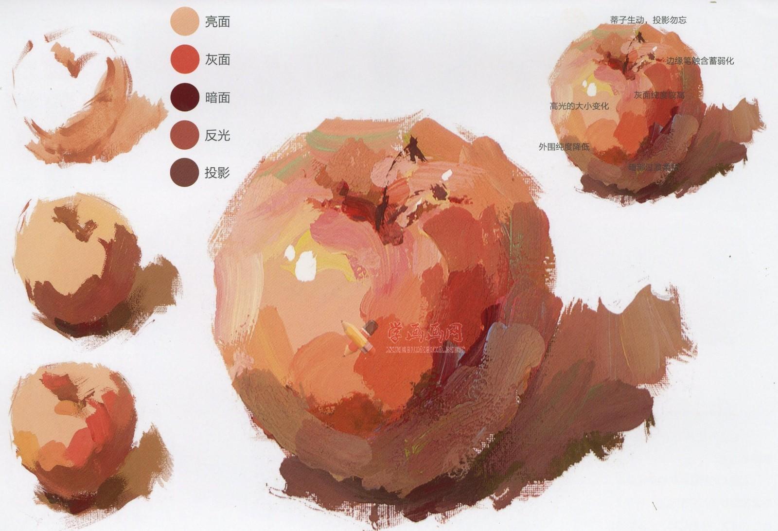 水粉画单体静物:苹果的画法图解及临摹高清范画图片(9)