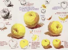 水粉画单体静物:苹果的画法图解及临摹高清范画图片