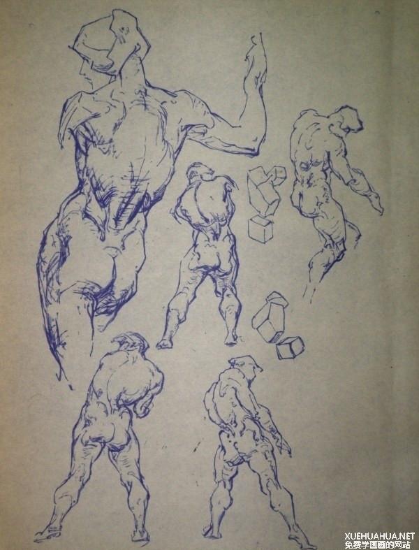 伯里曼艺用人体解剖手稿
