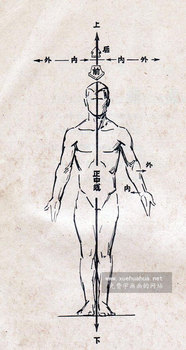 艺用人体解剖-基本术语解释