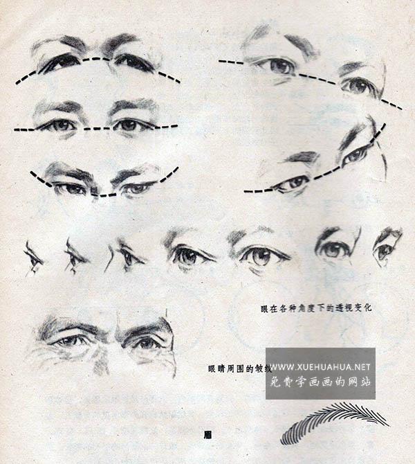 眼睛眉毛的结构讲解(6)