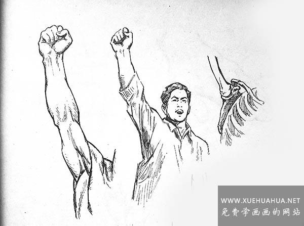 人体结构:肩背部结构画法及肌肉名称(2)