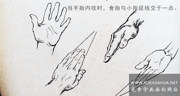 绘画资料:手的结构及画法详解