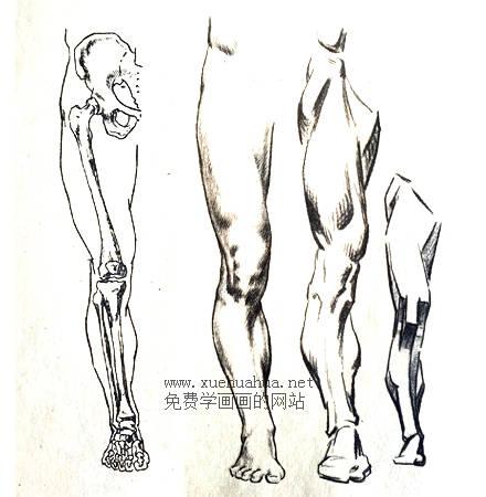 人体结构教程:下肢形体结构(1)