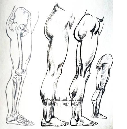 人体结构教程:下肢形体结构(2)