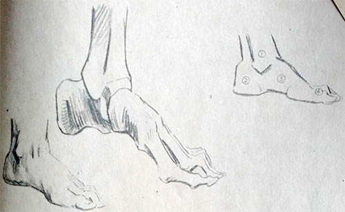 人体骨骼手绘素描