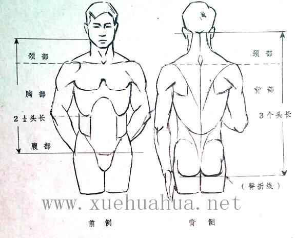 人体结构教程:躯干的解剖结构(1)