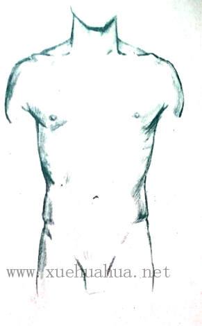 人体结构教程:躯干的解剖结构(18)