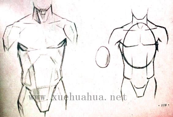 人体结构教程:躯干的解剖结构(19)