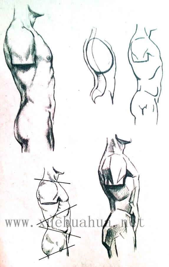 人体结构教程:躯干的解剖结构(20)
