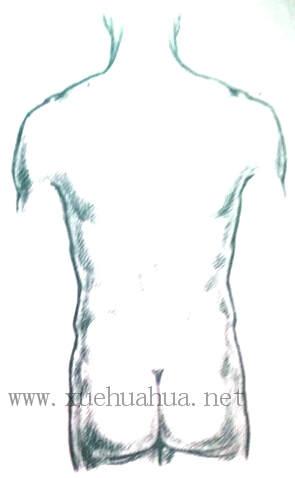 人体结构教程:躯干的解剖结构(21)