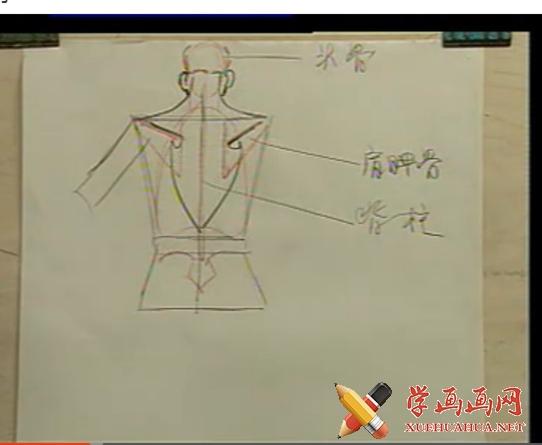 艺用人体解剖视频教程(1)