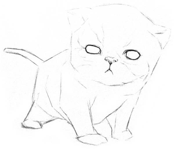 素描猫咪的画法(5)