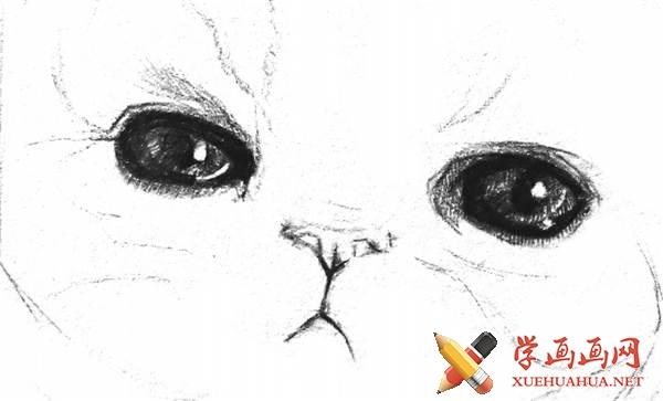 素描猫咪的画法(7)