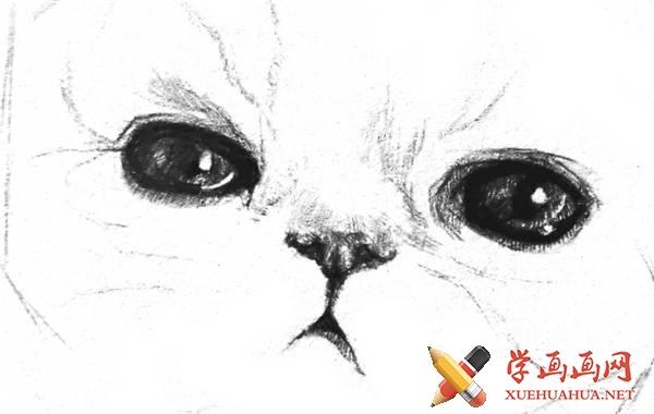 素描猫咪的画法(8)