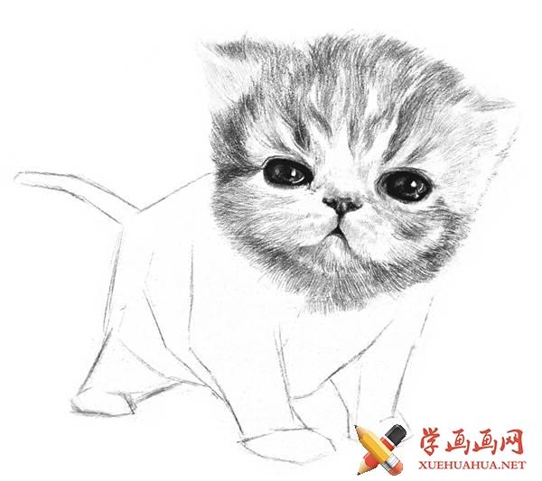 素描猫咪的画法(10)
