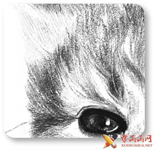 素描猫咪的画法(11)