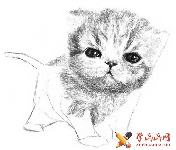 素描猫咪的画法(14)