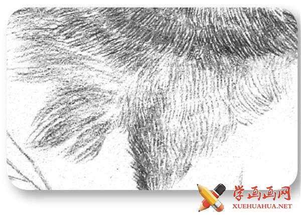 素描猫咪的画法(13)