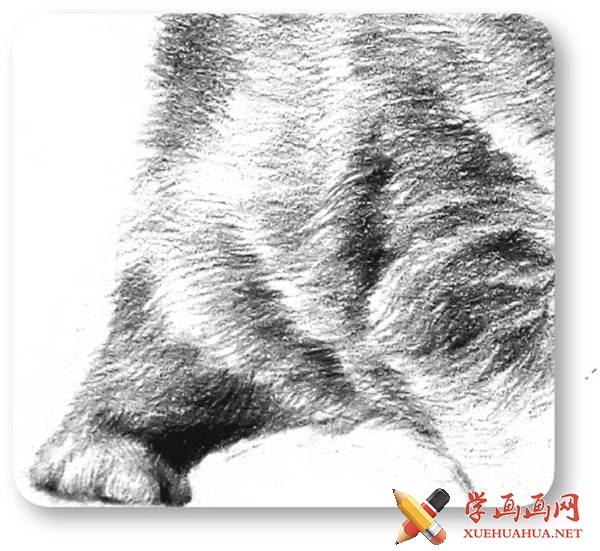铅笔画素描小猫咪的画法