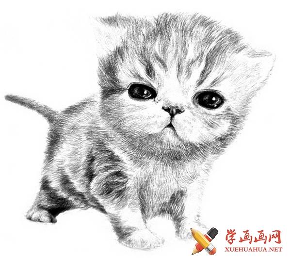 素描猫咪的画法(17)