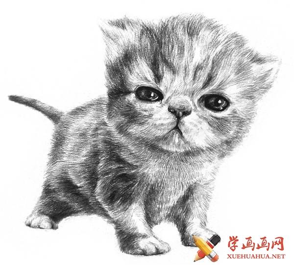 素描猫咪的画法(18)