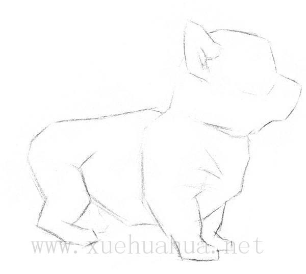 素描小狗的画法(2)