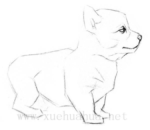 素描小狗的画法(3)