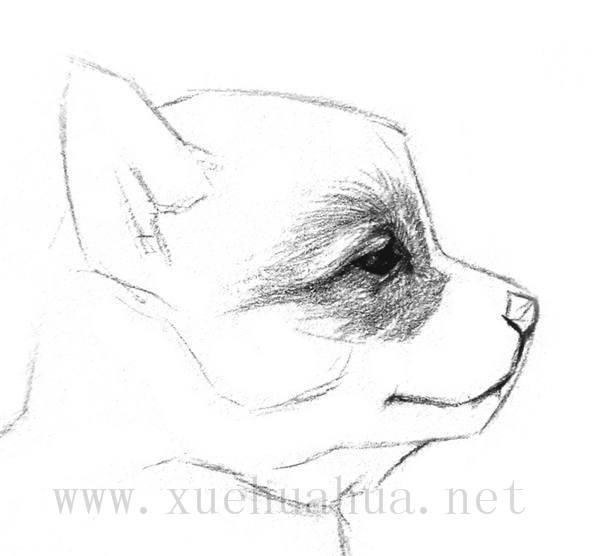 素描小狗的画法(4)