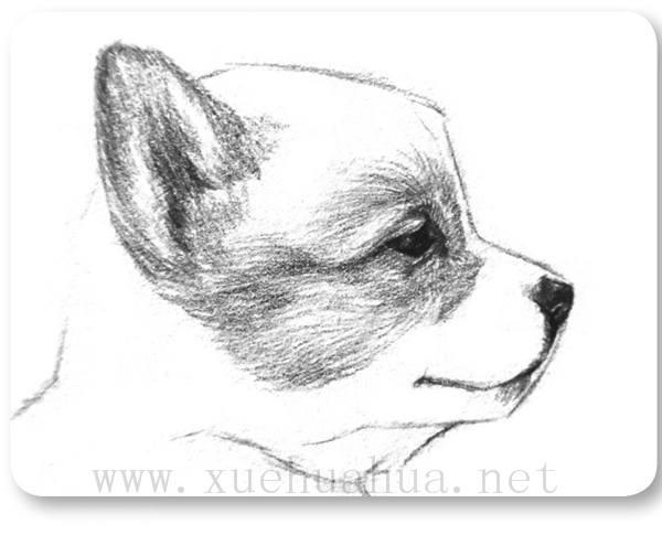 素描小狗的画法(5)
