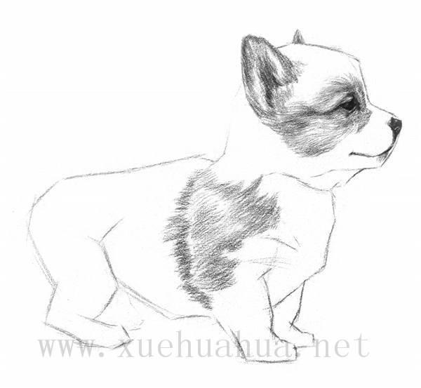 素描小狗的画法(6)