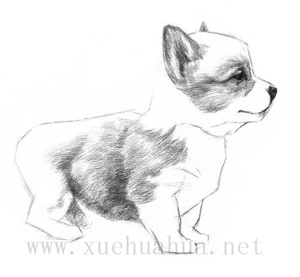 素描小狗的画法(7)