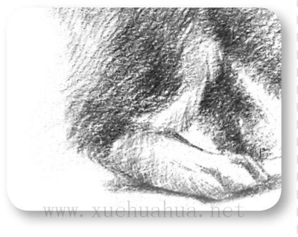 素描小狗的画法(9)