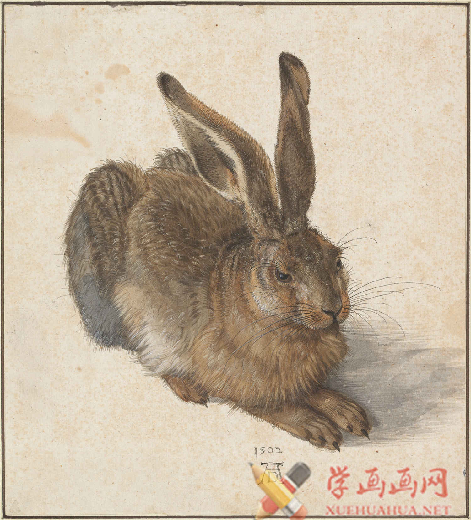丢勒高清素描画图片《素描动物篇》欣赏