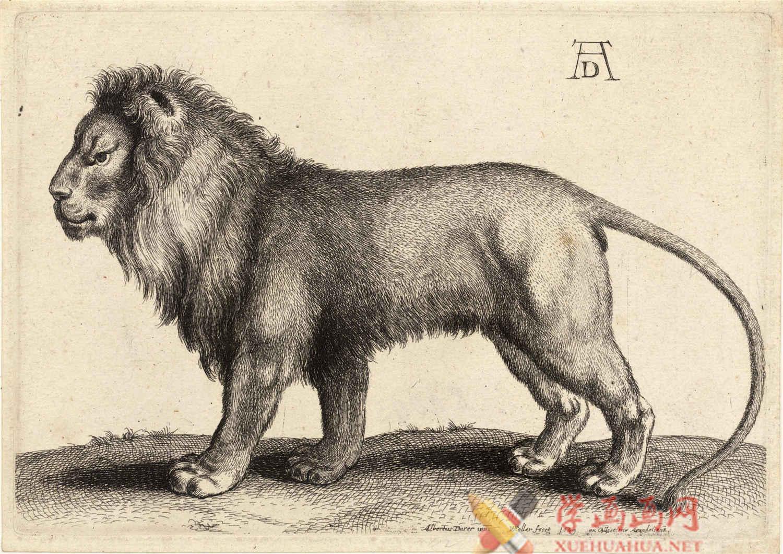 丢勒高清素描画图片《素描动物篇》欣赏(3)