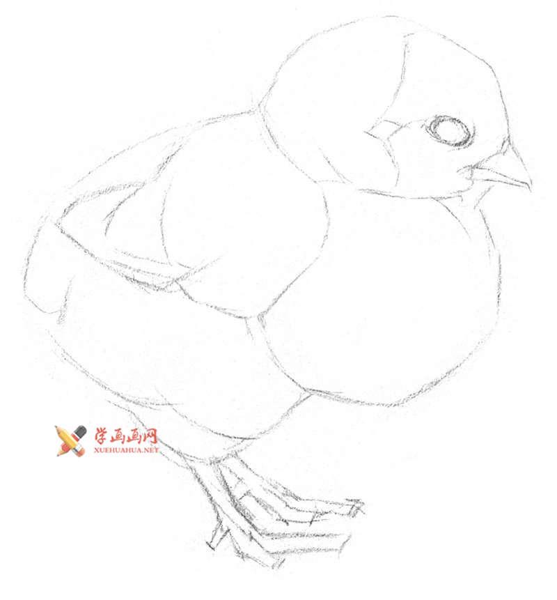动物素描教程_铅笔画一只毛茸茸的小鸡(3)