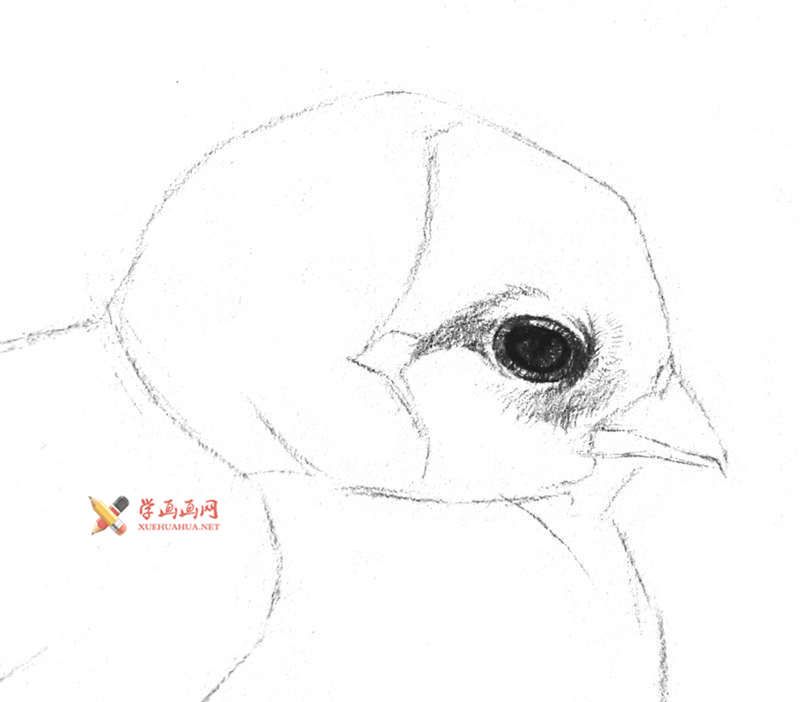 动物素描教程_铅笔画一只毛茸茸的小鸡(4)