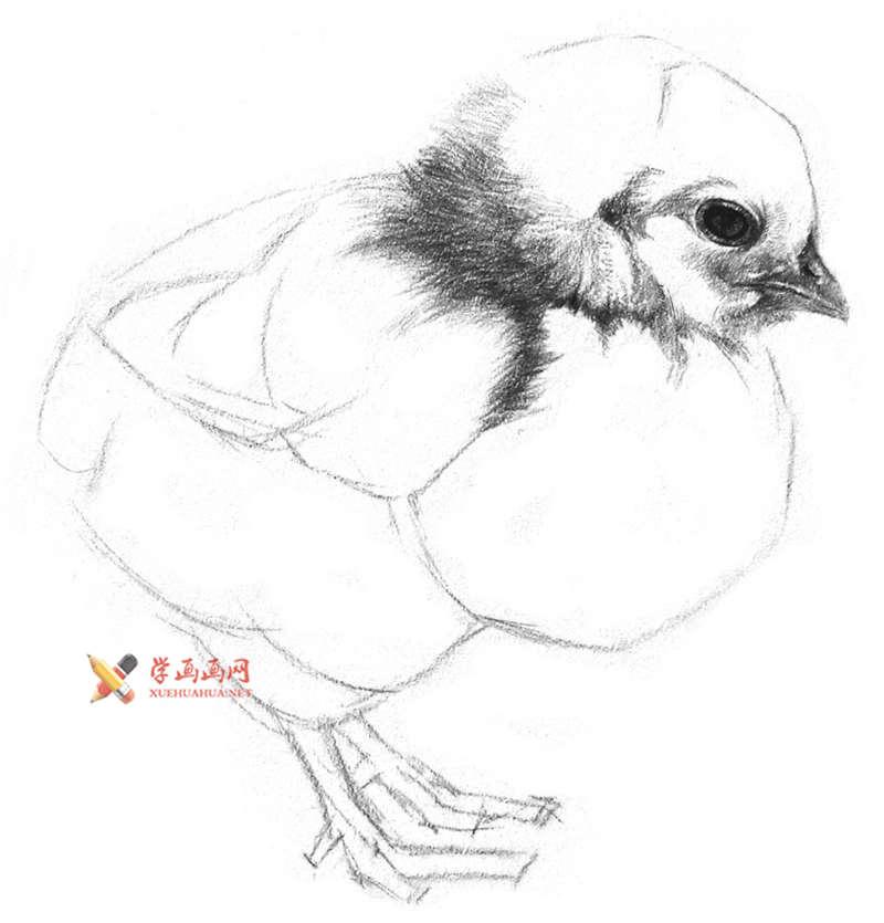 动物素描教程_铅笔画一只毛茸茸的小鸡(6)
