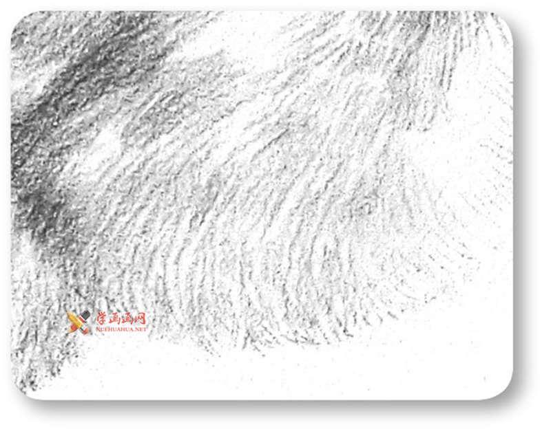 动物素描教程_铅笔画一只毛茸茸的小鸡(9)