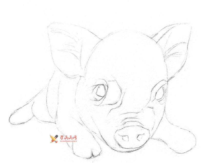 用铅笔画一只素描小猪