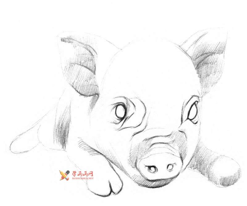用铅笔画一只素描小猪(2)