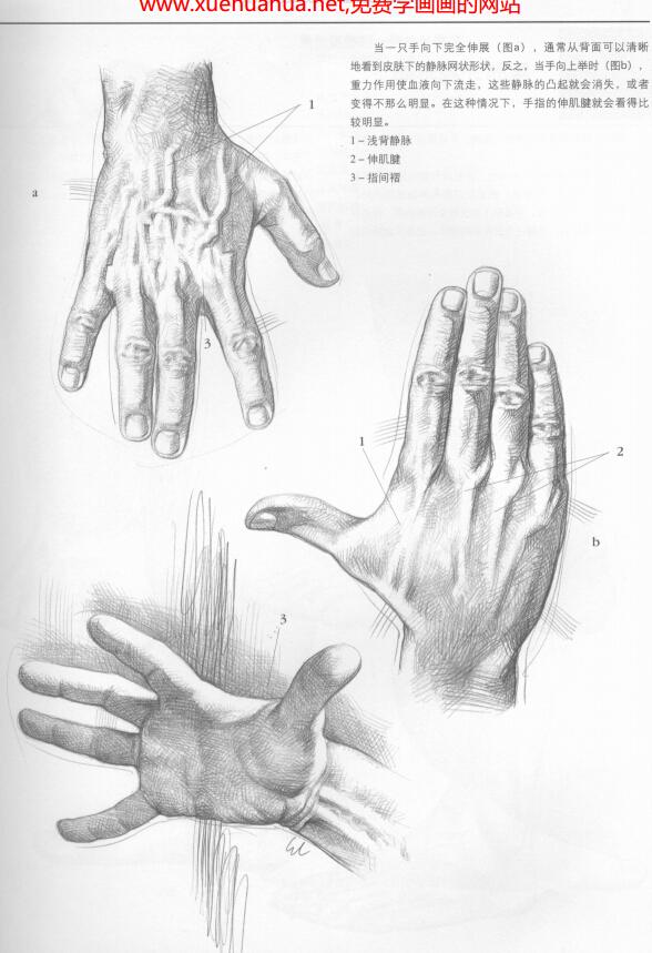 素描手和脚的画法教程(1)