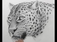 素描花豹的画法视频教程