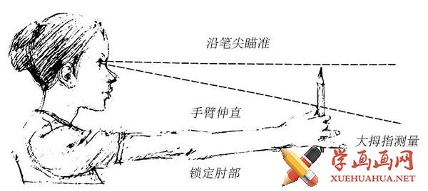 用铅笔测量所画对象的比例和中点
